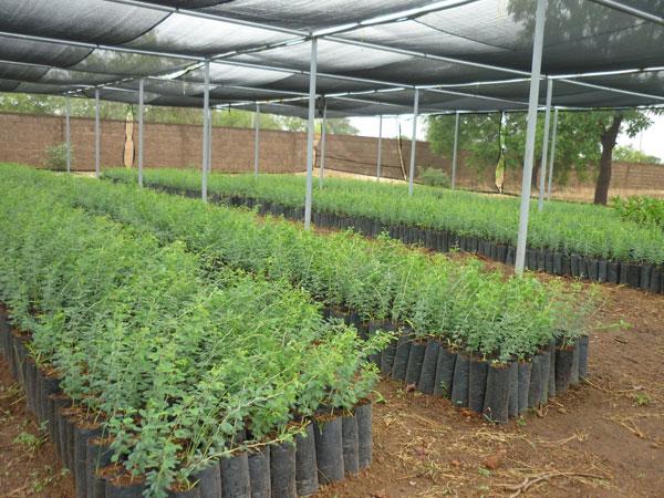 Agroforesterie PRCBM